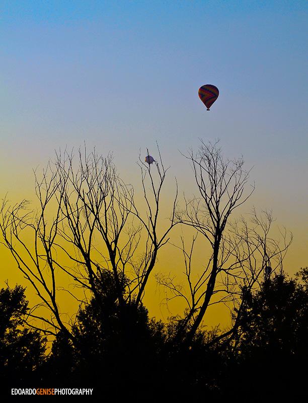 balloon-festival-egphoto006